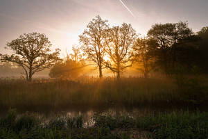 Morning Glory by Lightfoot11