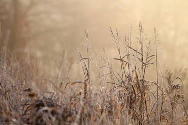 Frozen Wetlands by jo1976