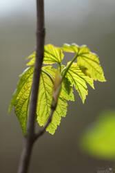 Early leaves by jo1976