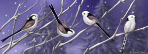 Long-tailed tits by Emberiza