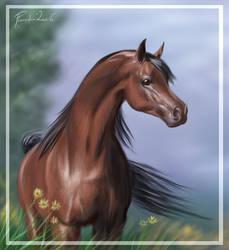 Arabian Stallion by Emberiza