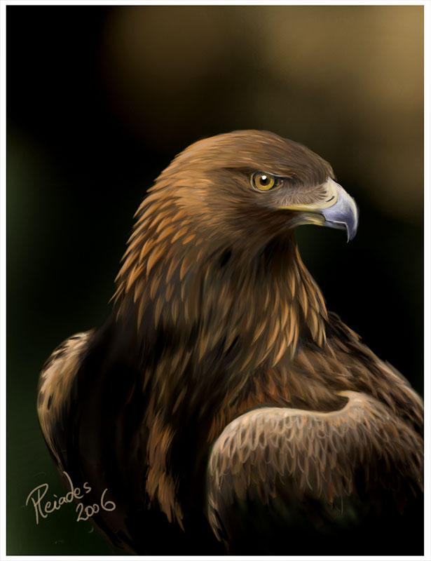golden eagle wallpaper. images Birdorable Golden Eagle