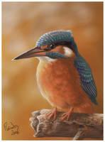 Kingfisher by Emberiza