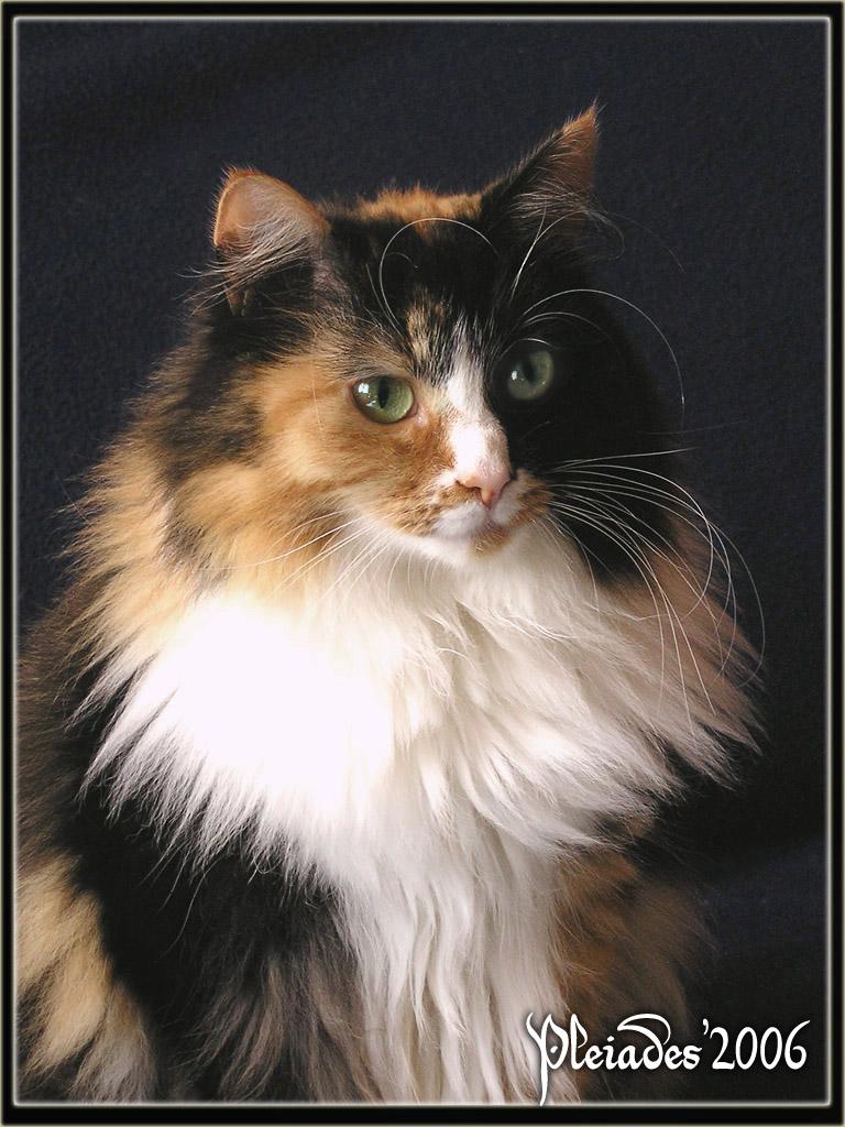 Foudrys Werkstatt 2015 My_princess_cat___portrait_1_by_Emberiza