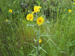 Wildflowers 2 by Artistfire