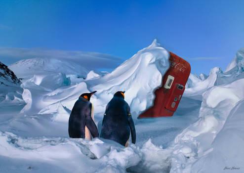 Arctic Cola