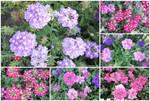 City flowers2012