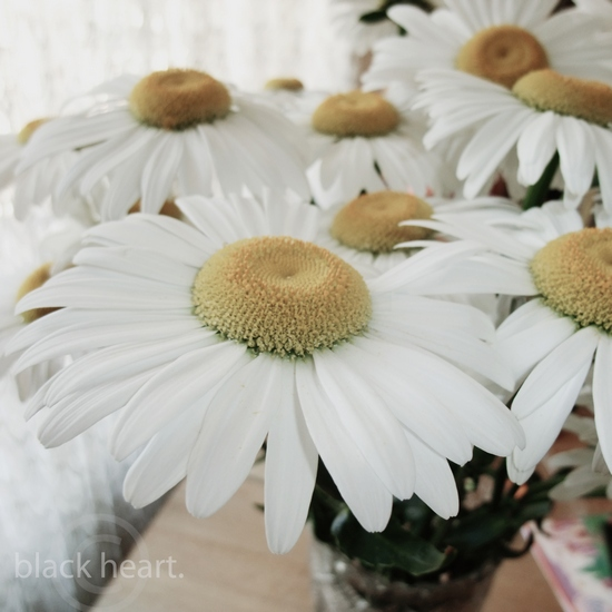 camomile. by a-place4my-head