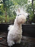 curious llama by Llamadealer