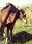 Foals I