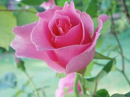 A Blooming Fancy by Crishf