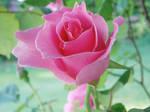 A Blooming Fancy