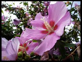 A Fancy Bloom by Crishf