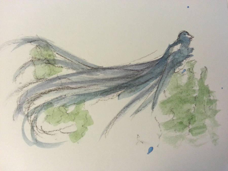 Long-Tailed Widow Bird by Crishf