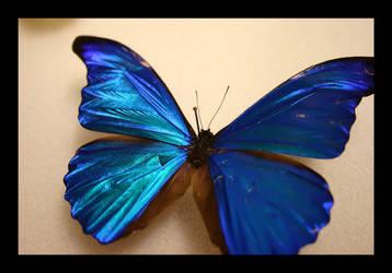 Lapis Lazuli by lunablossom