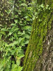 tree garden