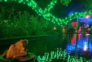 frog  pond with lights