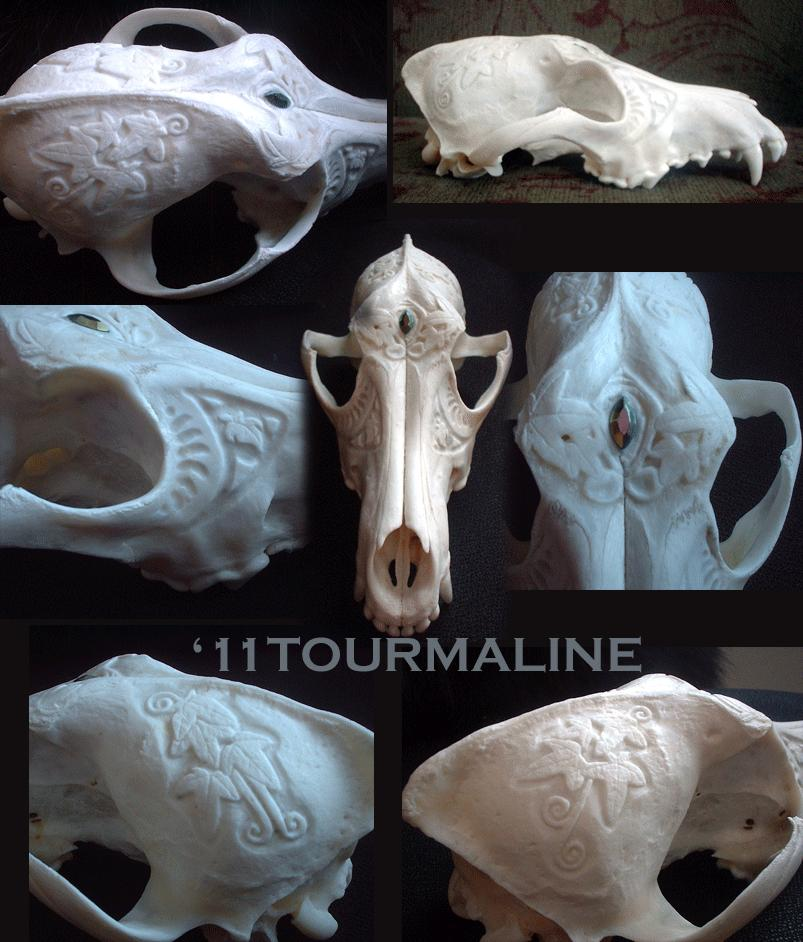Coyote skull relief carvings by tourmaline on deviantart