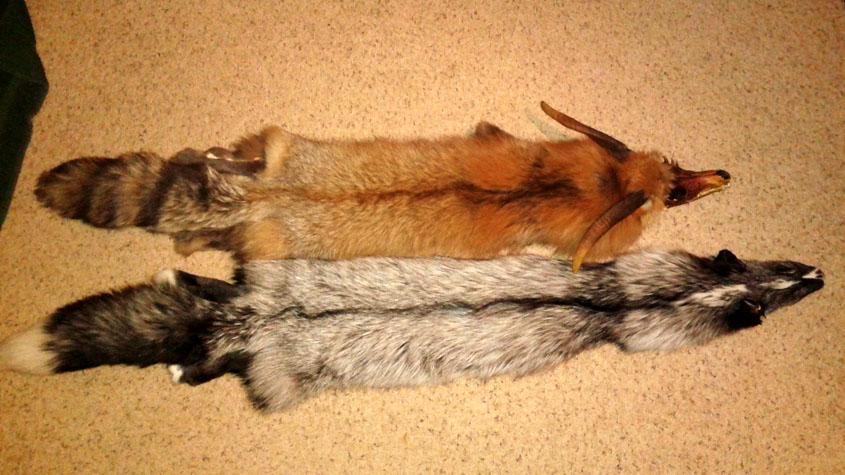 big fox by tourmaline-83