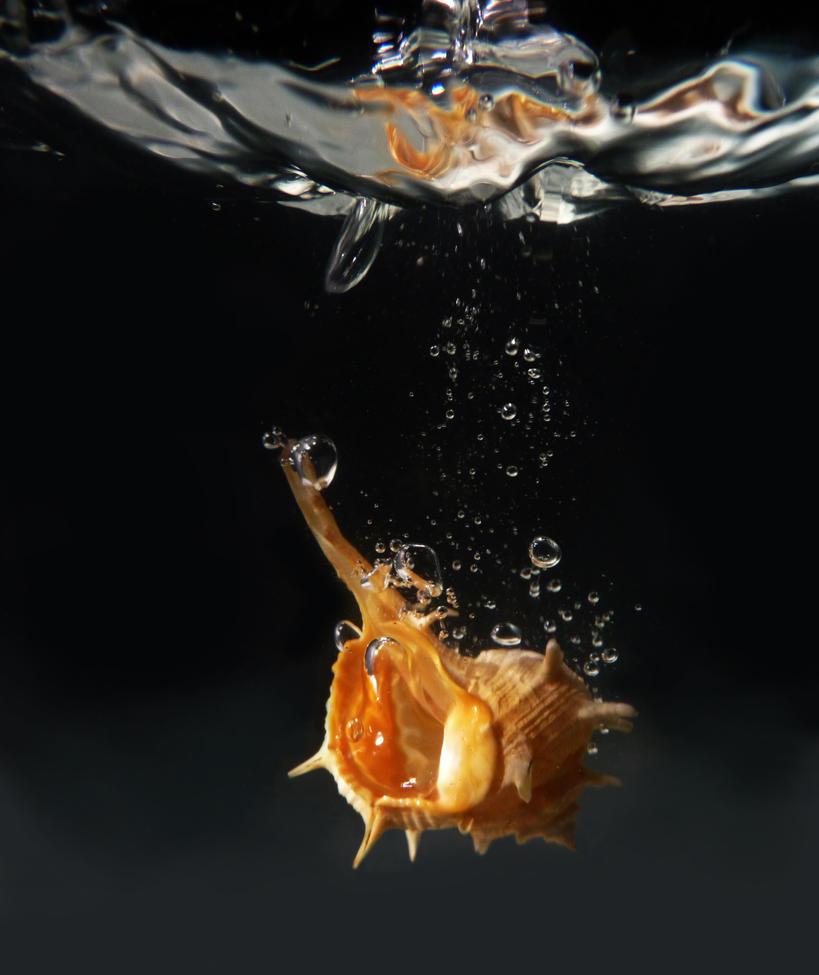 Pearl Shell by borda