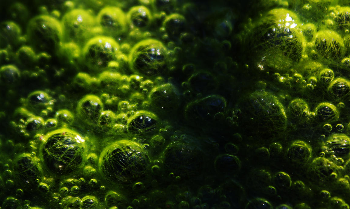 Green Bubble Wallpaper by borda
