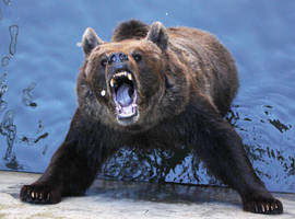 Cute Teddy Bear - Stock Image by borda