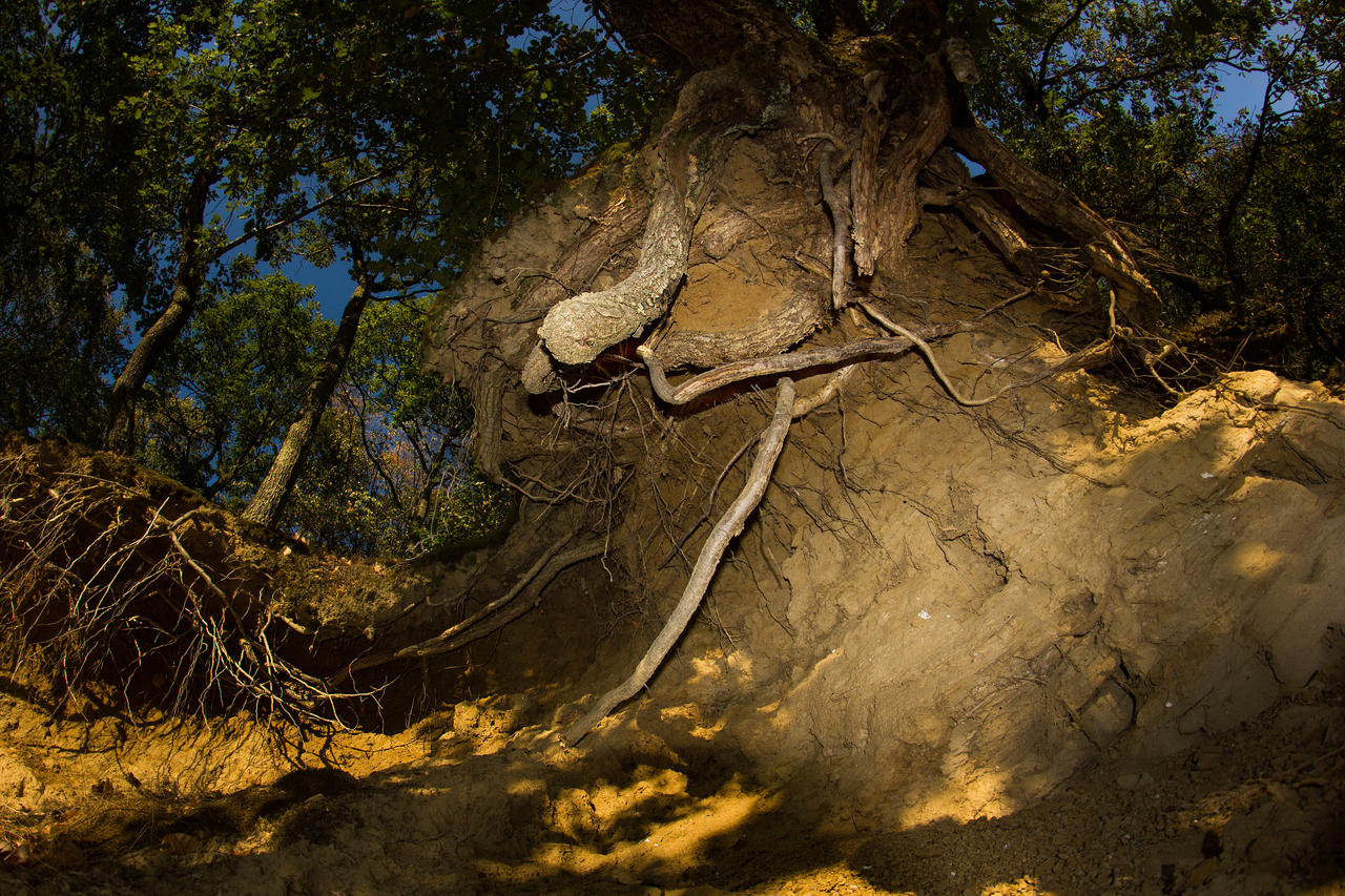 Roots by borda