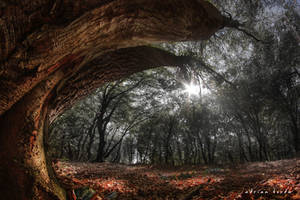 Wonderland by borda