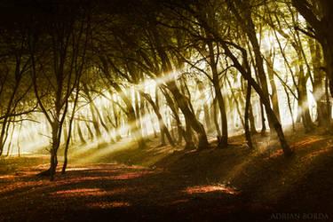 Goold Morning! by borda