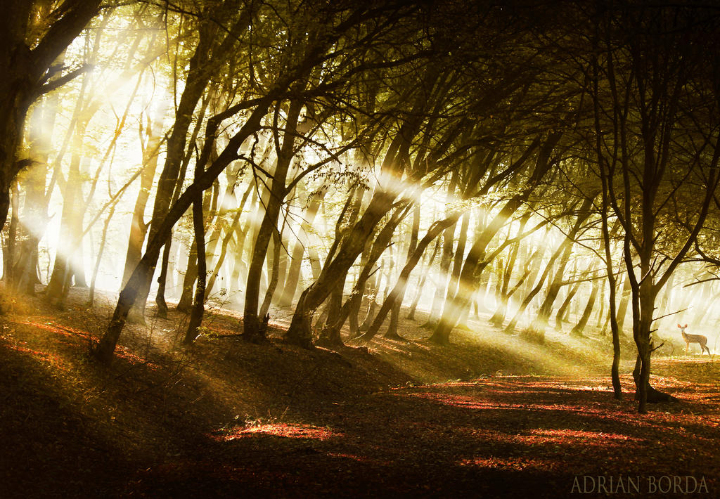 Sunblast II by borda