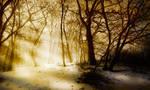 Shadows on Snow and Smog