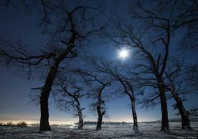 Frozen Creeps by borda