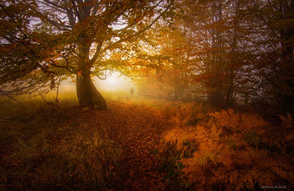 Following Tolkien by borda