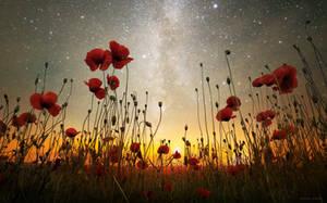 A midsummer night's dream by borda