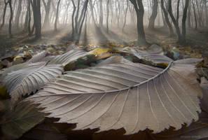 The fallen ones.. by borda