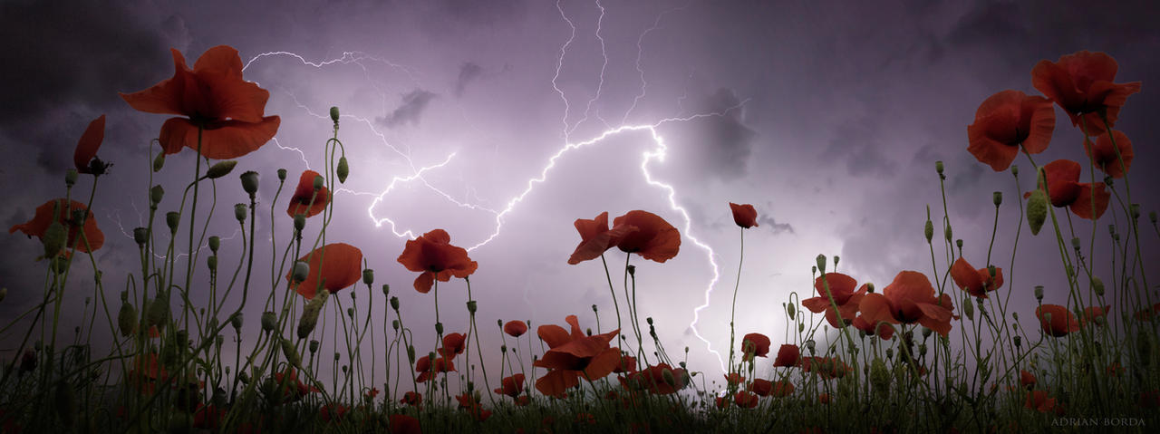 A Midsummer's Storm by borda