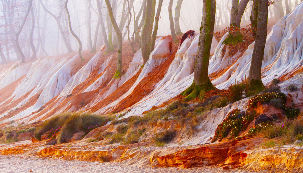 Enchanted Forest by borda