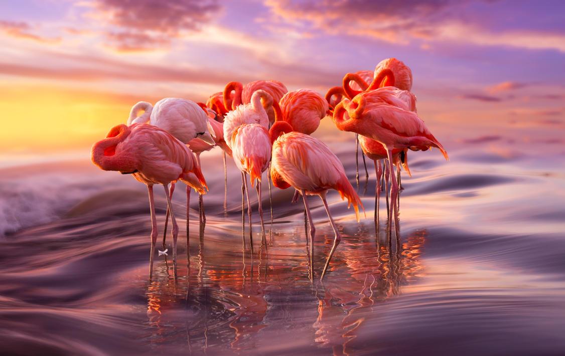 Flamingo Siesta by borda