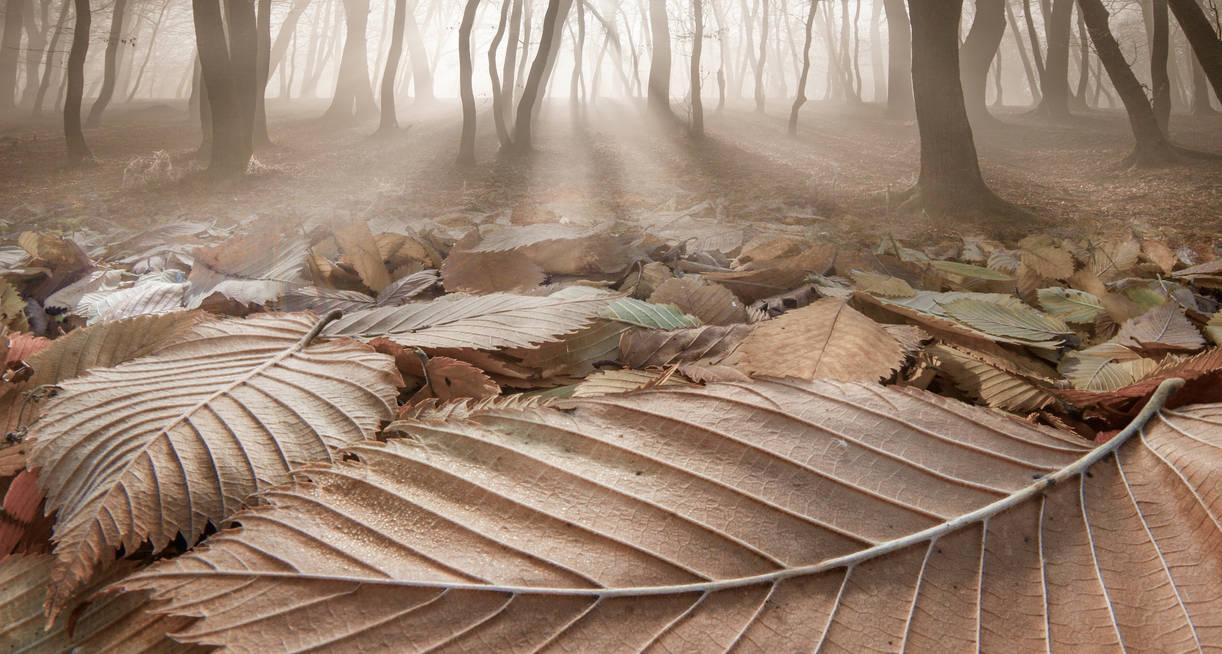 The Fallen Ones by borda