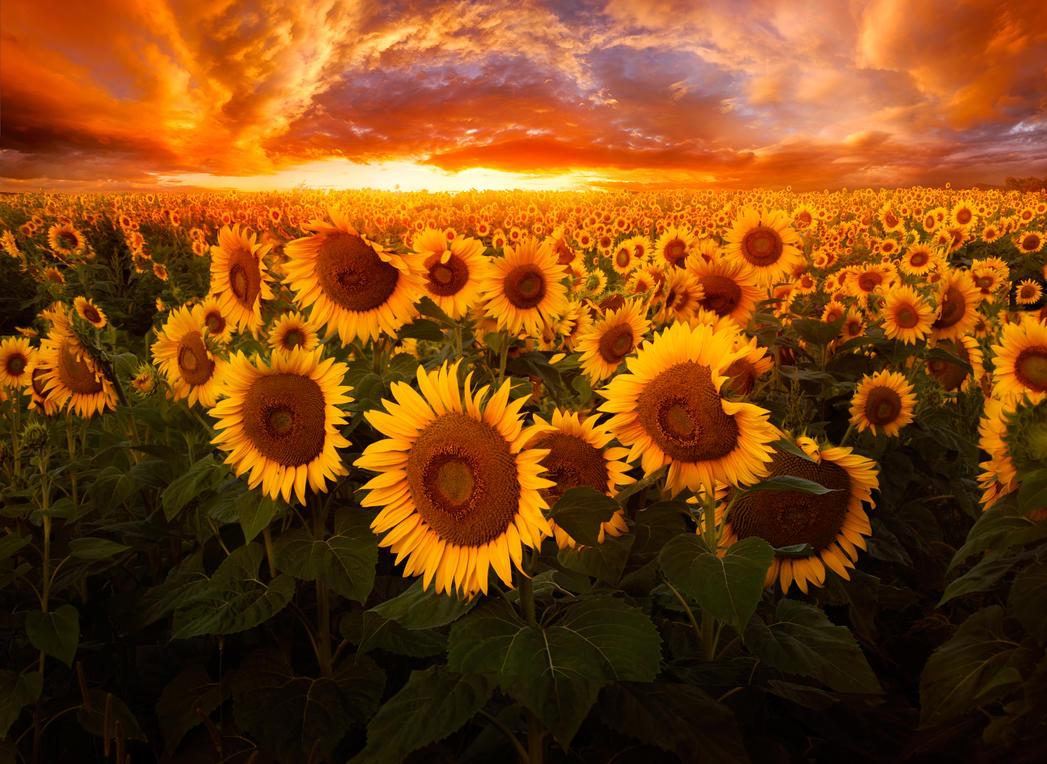 Empire of The Sun by borda
