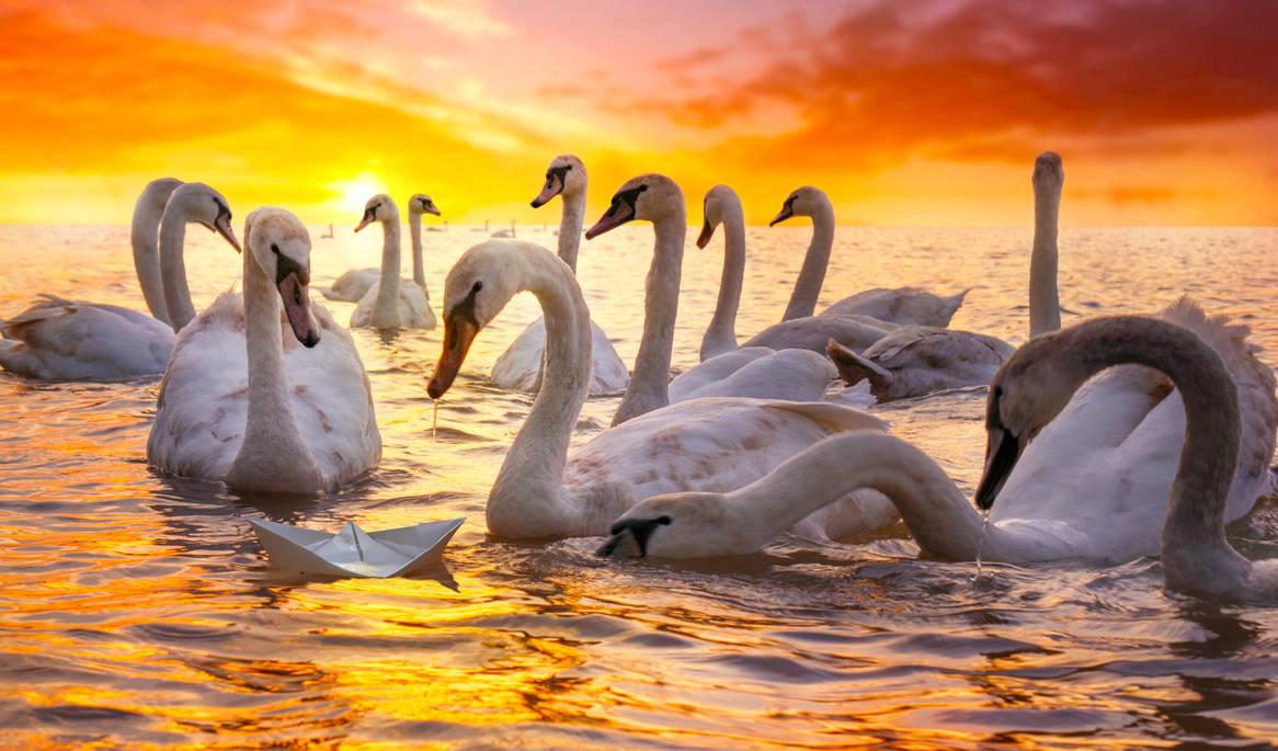 The Ugly Duckling by borda