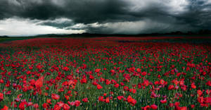 Waiting for the storm by borda