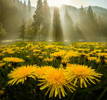Morning Glory by borda