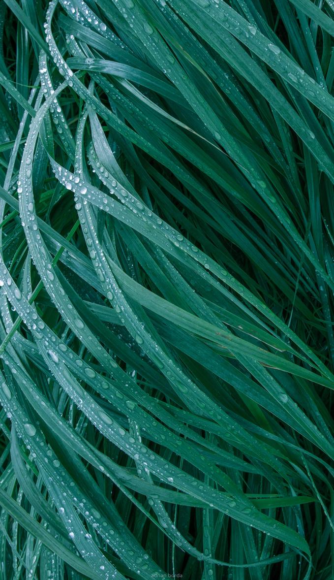 Green Grass phone wallpaper by borda