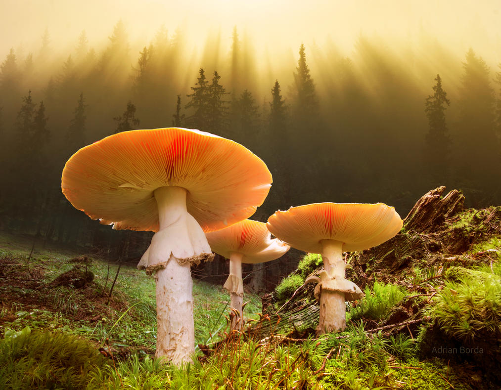 The Magic Forest by borda