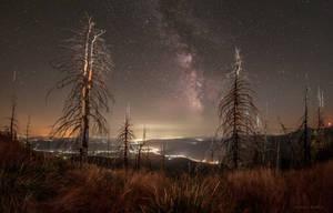 A Midsummer Night's Dream II by borda