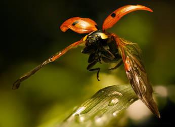 Rising Cutie Pie - Ladybug flying by borda