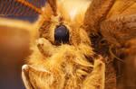 Teddy Moth by borda