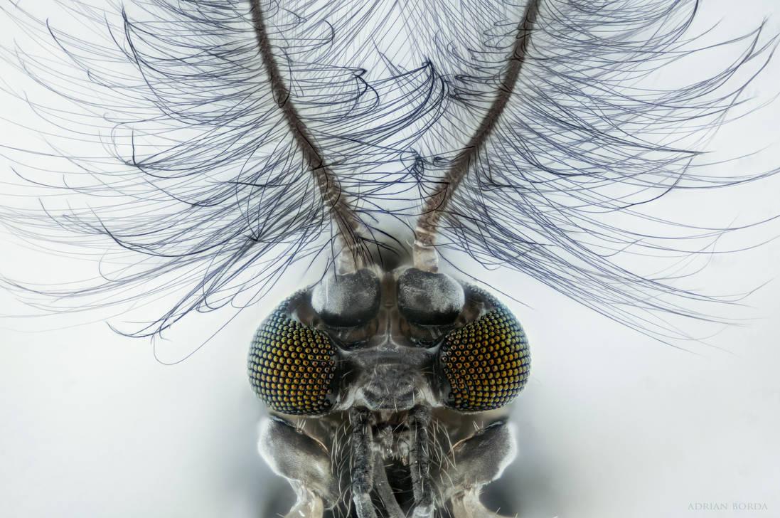 The Alien Radio DJ - Chironomidae by borda