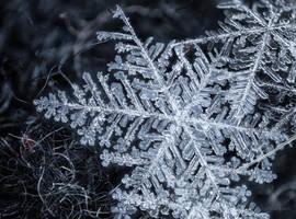 Snowflakes - Fingerprints of Stars by borda